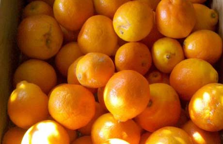 Citrus-Polymethoxy-Flavones